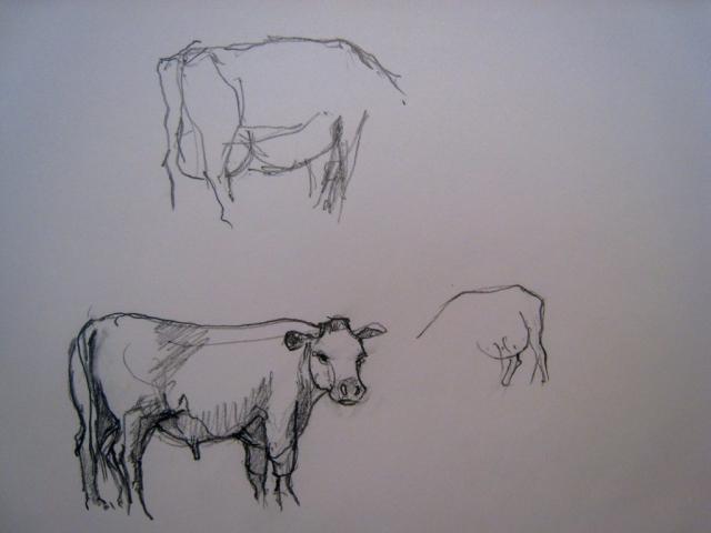 APM Cattle