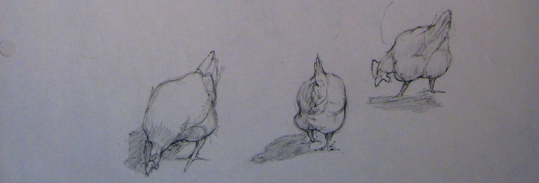 APM Chickens crop