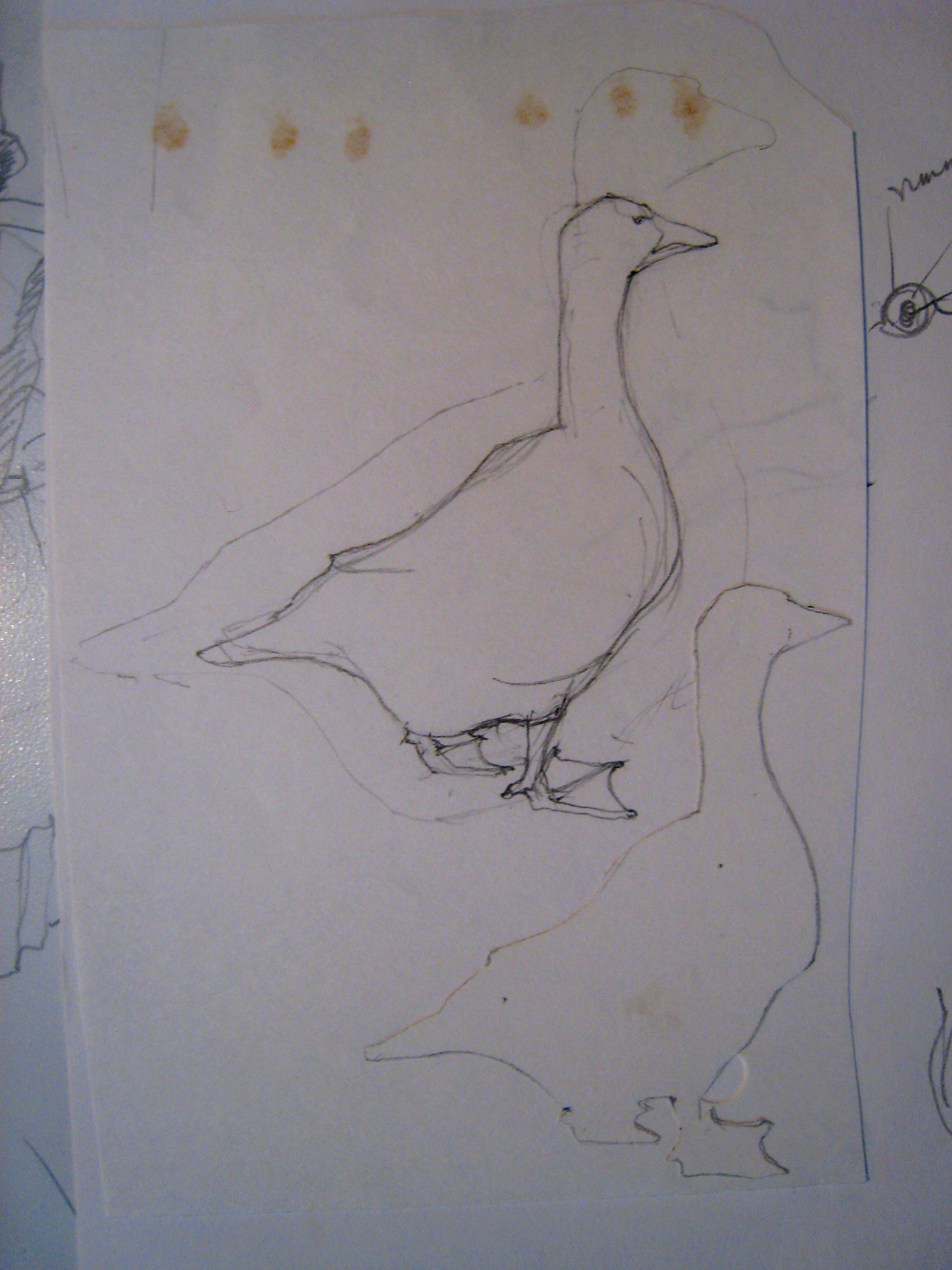 APM Ducks and Geese