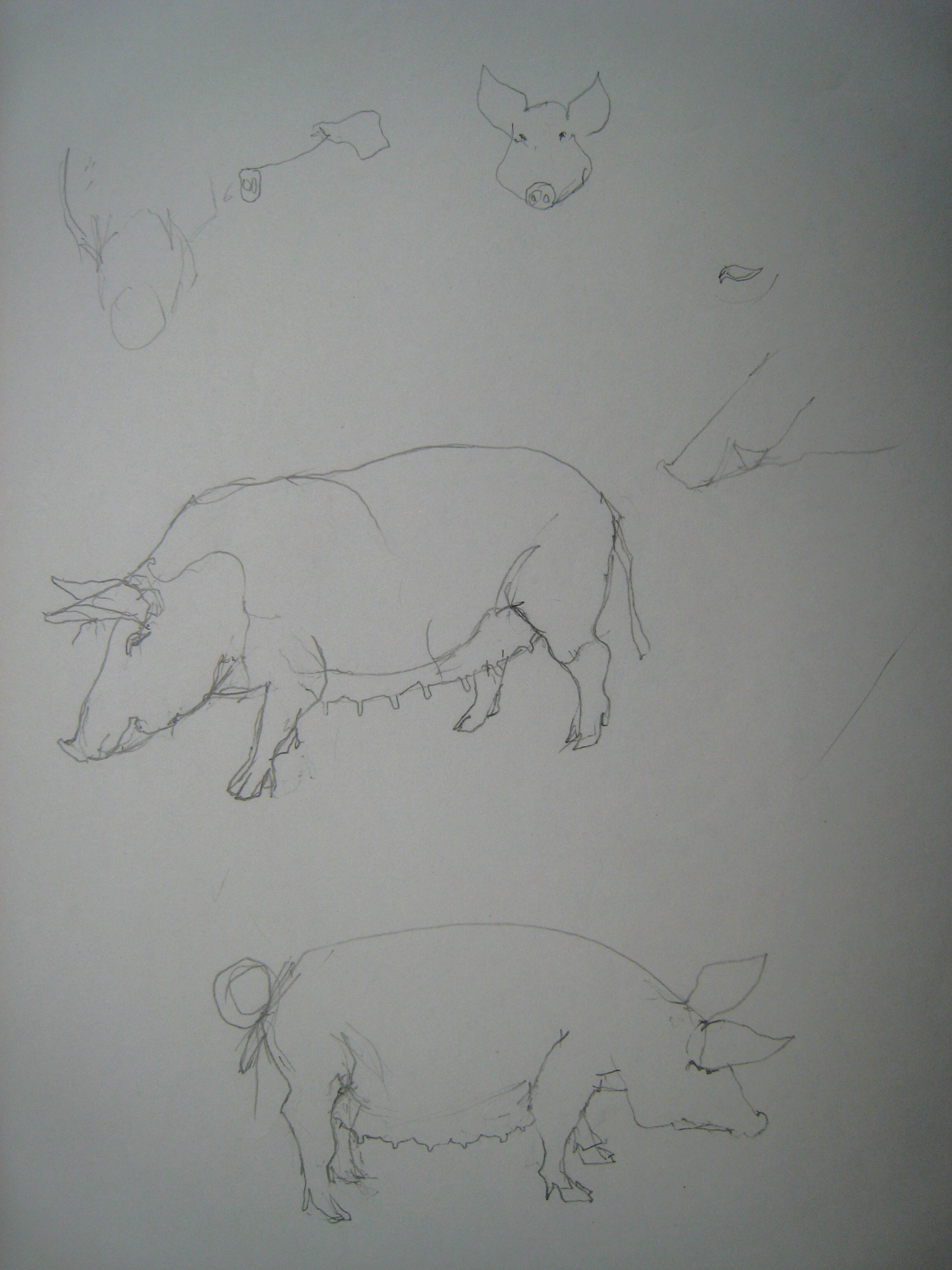 APM Pig