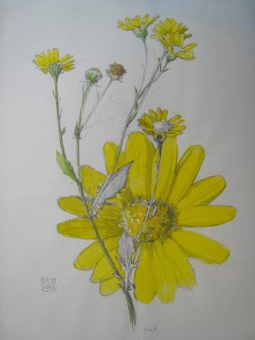 Germansweek landscapes, yellow flower